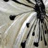 Petunia-scomposta (3)